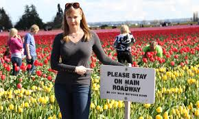 skagit valley tulip festival bloom map tulips are blooming in skagit valley oc 2 seattle