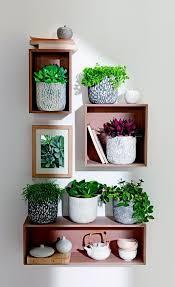 best 25 indoor planters ideas on pinterest plants indoor wall