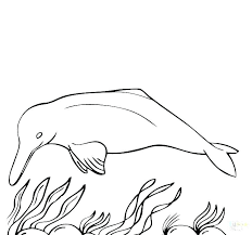 printable dolphin images coloring pages dolphins dolphin printable colouring pages dolphin