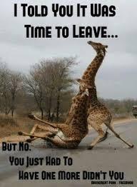 Drunk Giraffe Meme - image result for giraffe studying giraffes pinterest giraffe