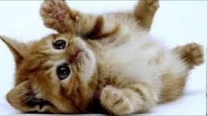 imagenes de gatitos sin frases fotos de gatitos lindos y algunos com frases tiernas youtube