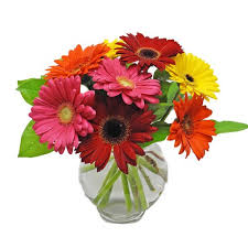 gerbera daisies get well flowers gerbera daisies cathy cowgill flowers