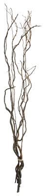 curly willow branches curly willow branches decorist