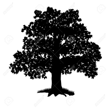 White Oak Tree Drawing Oak Tree Silhouette With Leaves On A White Background Royalty Free