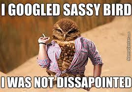 Sassy Meme - sassy bird is sassy by yayayaya meme center