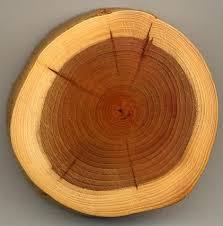 file taxus wood jpg wikimedia commons
