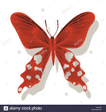 graphic butterfly with spots on a wall in red and gray shades