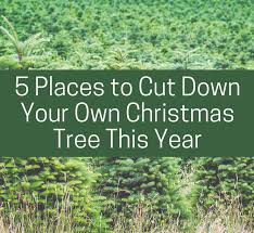 where can you cut down your own christmas tree christmas lights