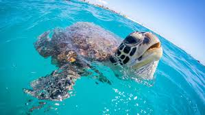 Great Barrier Reef Map 10 Reasons To Visit The Great Barrier Reef Tourism Australia