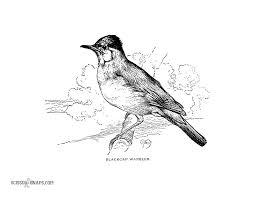 blackcap warbler european song bird scissor snaps