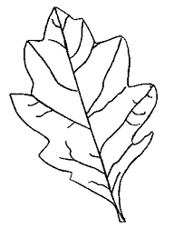 picture of oak leaves free download clip art free clip art