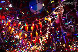 where chili pepper lights meet tree lights flickr