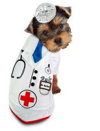 Doctor Halloween Costume Doctor Barker Dog Halloween Costume
