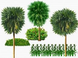download free trees psd