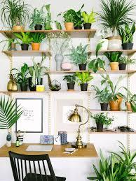 Beautiful Indoor Plants Best 25 Desk Plant Ideas On Pinterest Plant Decor Desk And