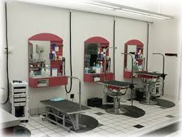 dog grooming table for sale resources shop salon spa business plans