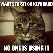 Memes First World Problems - first world cat problems by star meme center