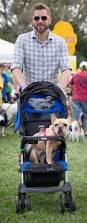 american eskimo dog omaha walk for the animals raises spirits of pet lovers and money for