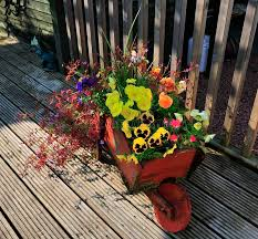 barrow full of flowers stock image image of bright 31999757