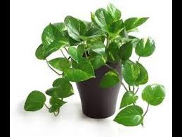 common house plants names 7778 common household plants gardening