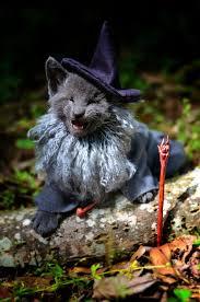 Gandalf Halloween Costume Gandalf Grey Funny Cat Costumes Popsugar Tech Photo 16
