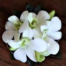 orchid wrist corsage brisbane formal flowers u2013 magnolia