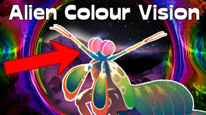 mantis shrimp color vision really superior feat the oatmeal