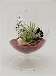 cheap white terrarium find white terrarium deals on line at