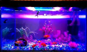 Aquarium Led Light Aquarium Led Lighting High Intensity Enhance Fish Colour 4