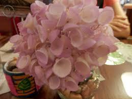 November Flowers File Shell Flower Craft Jpg Wikimedia Commons