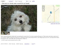 some dog rescues are fronts for puppy mills havanese world