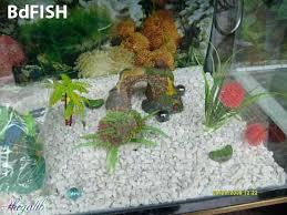 important aquarium shops in dhaka city bangladesh bdfish feature