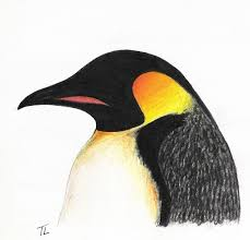 emperor penguin by chiroookami on deviantart