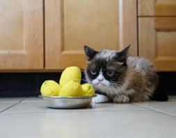 grumpy cat toys are available at petsmart enter grumpy cat lemon