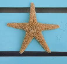 beach decor coastal picture frame with sugar starfish