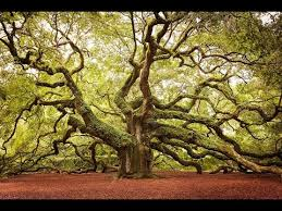 top ten interesting facts about trees