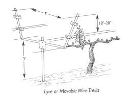 Trellis System Trellis Archives U2022 Dracaena Wines