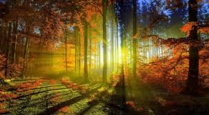 imagenes de otoño para fondo de escritorio fondos de pantalla de otoño y hojas fondos para la compu