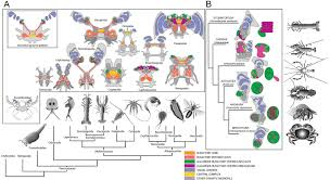 figures and data in an insect like mushroom body in a crustacean
