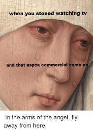 Aspca Meme - when you stoned watching tv and that aspca commercial come on