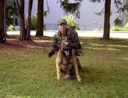 should i get a belgian tervuren is a belgian malinois the right dog for me blog by k9 pro and