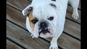 best of dog photos cute dogs free download rocadog youtube