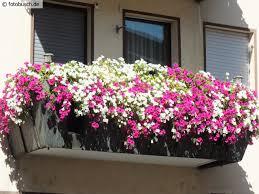 geranien balkon http fotobusch de fotos pflanzen blumen geranien balkon mit