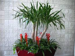 hull rectangle planter white mid century modern flower pot home