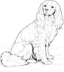 16 golden retriever coloring pages animals printable coloring