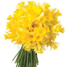Wholesale Flowers Online Fresh Cut Wholesale Flowers Online For Sale