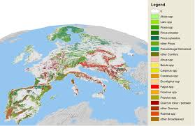 map or europe european forest institute tree species maps for european forests