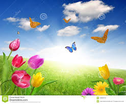 flower with butterfly stock photo image of plant greeting 19808150