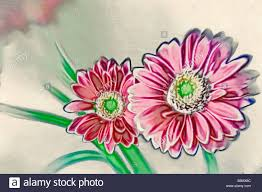 a sketch of red gerbera daisy flower pair with green centers stock