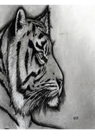 how to sketch a tiger step by step learn how to draw
